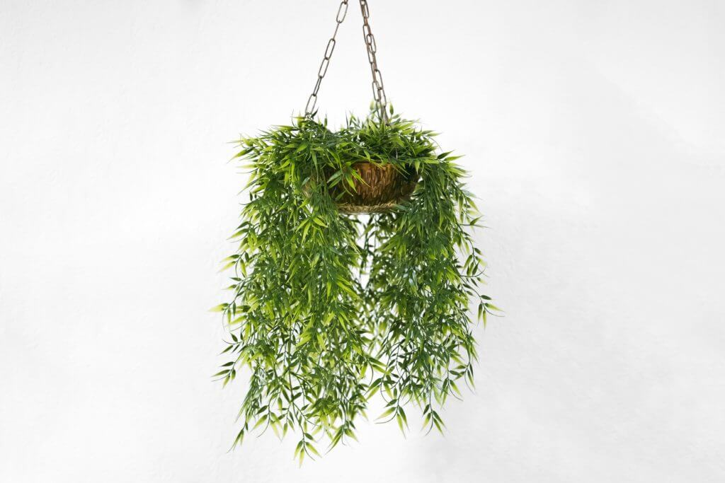 Hanging basket used as a planter