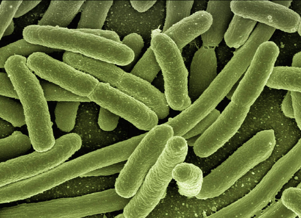 Bacteria assimilating E.Coli